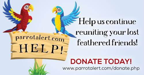 Lost and Found Parrots / Birds - Parrot / Bird Reporting and