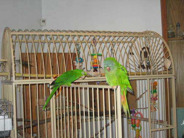 Lost - Conure - POLLY
