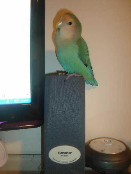 Lost - Lovebird - Skye