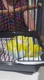 Found Parrotlet