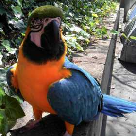 Lost Macaw
