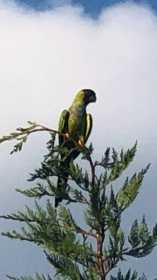 Sighting Bird / Parrot