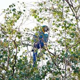 Sighting Macaw